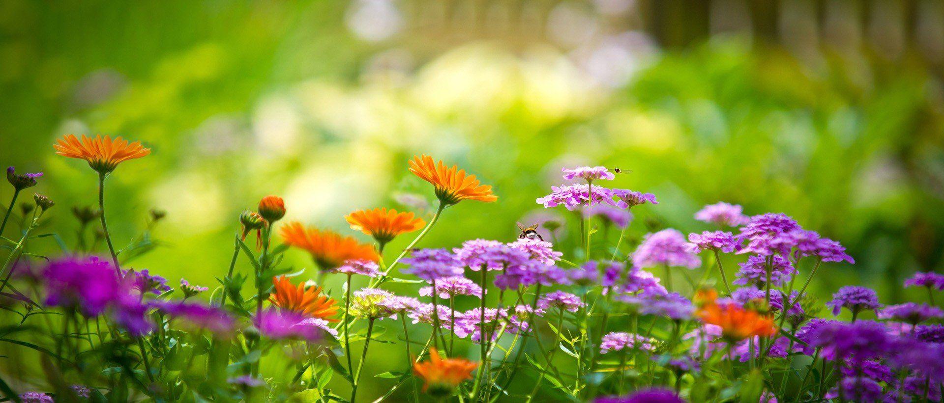 GardenMeister